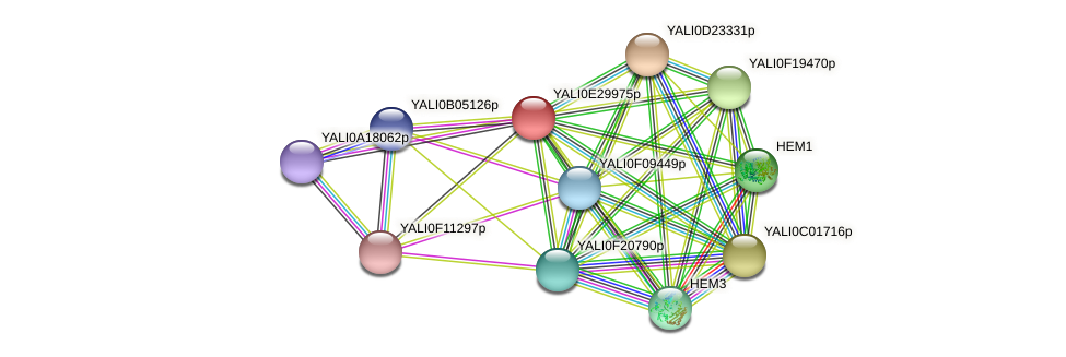 XP_504574.1 protein (Yarrowia lipolytica) - STRING interaction network