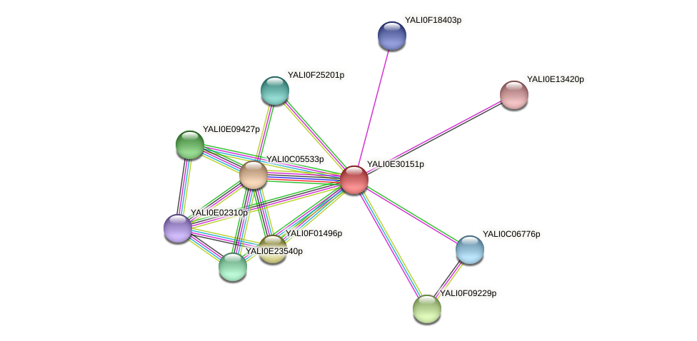 XP_504580.1 protein (Yarrowia lipolytica) - STRING interaction network