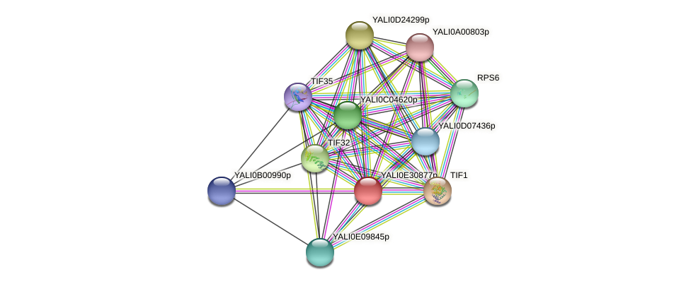 XP_504609.1 protein (Yarrowia lipolytica) - STRING interaction network