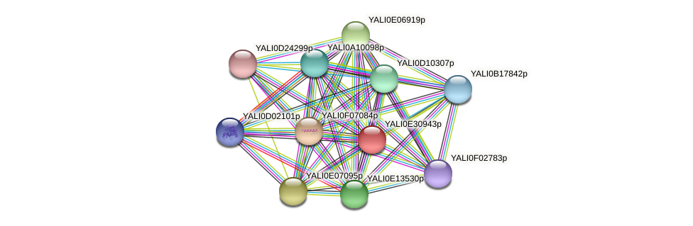 XP_504612.1 protein (Yarrowia lipolytica) - STRING interaction network