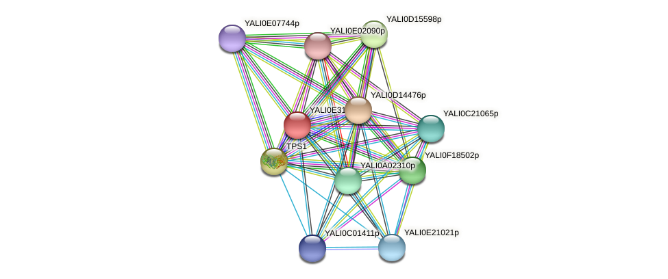 XP_504619.1 protein (Yarrowia lipolytica) - STRING interaction network
