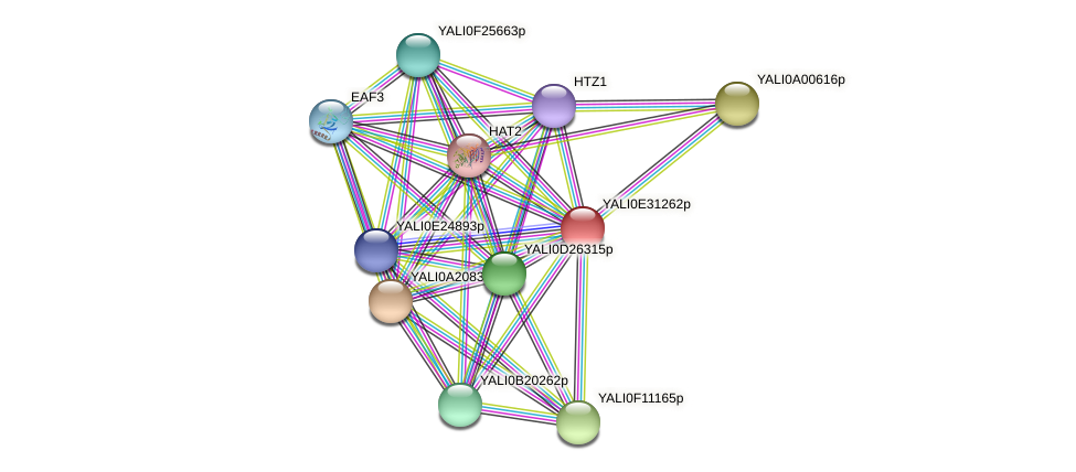 XP_504627.1 protein (Yarrowia lipolytica) - STRING interaction network
