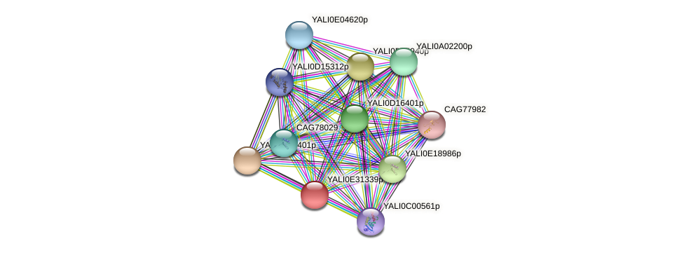 XP_504631.1 protein (Yarrowia lipolytica) - STRING interaction network