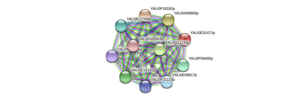 XP_504637.2 protein (Yarrowia lipolytica) - STRING interaction network