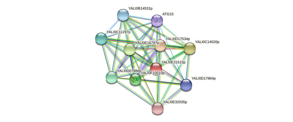 XP_504639.1 protein (Yarrowia lipolytica) - STRING interaction network