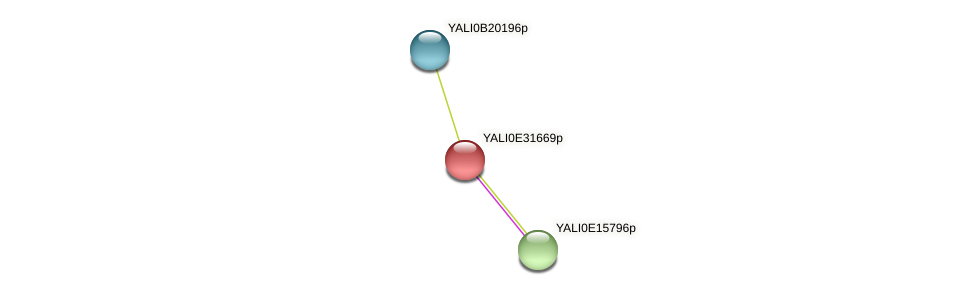 XP_504648.1 protein (Yarrowia lipolytica) - STRING interaction network