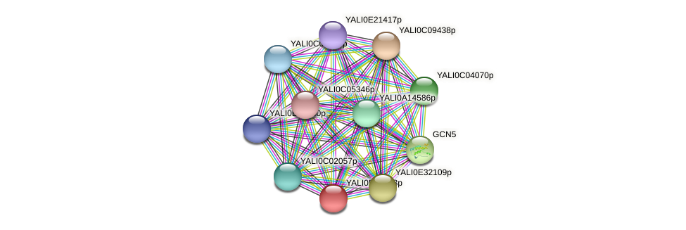 XP_504656.1 protein (Yarrowia lipolytica) - STRING interaction network