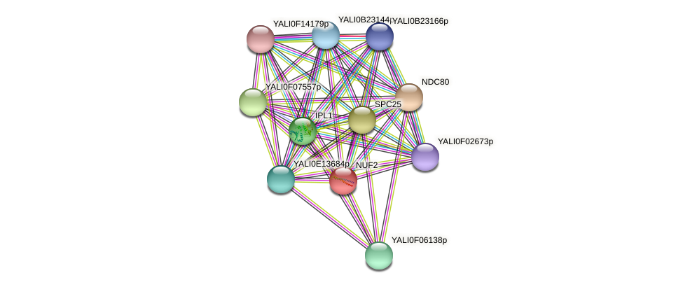 NUF2 protein (Yarrowia lipolytica) - STRING interaction network