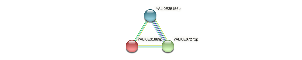 XP_504659.1 protein (Yarrowia lipolytica) - STRING interaction network