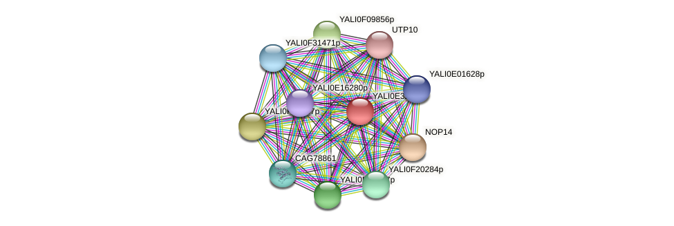XP_504667.1 protein (Yarrowia lipolytica) - STRING interaction network