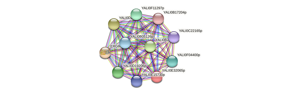 XP_504668.1 protein (Yarrowia lipolytica) - STRING interaction network