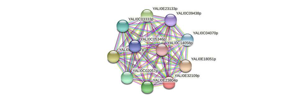 XP_504670.1 protein (Yarrowia lipolytica) - STRING interaction network