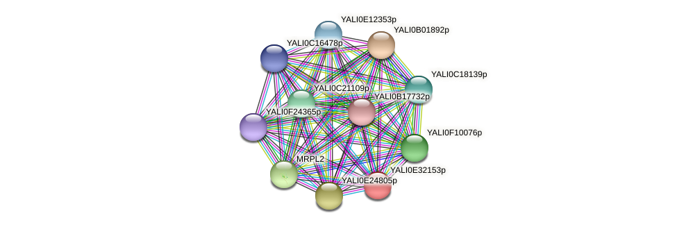 XP_504672.1 protein (Yarrowia lipolytica) - STRING interaction network