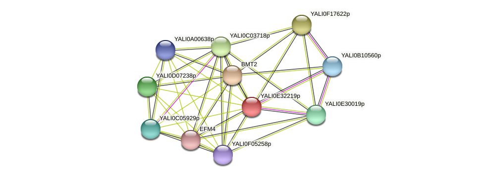 XP_504675.1 protein (Yarrowia lipolytica) - STRING interaction network