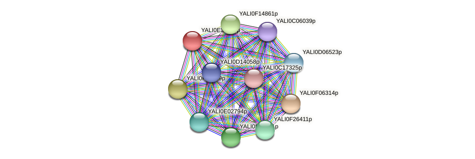 XP_504688.1 protein (Yarrowia lipolytica) - STRING interaction network