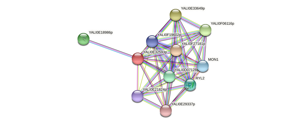 XP_504692.1 protein (Yarrowia lipolytica) - STRING interaction network