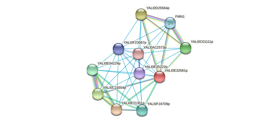 XP_504696.1 protein (Yarrowia lipolytica) - STRING interaction network