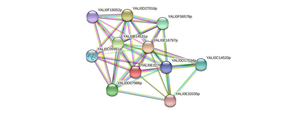 XP_504700.1 protein (Yarrowia lipolytica) - STRING interaction network