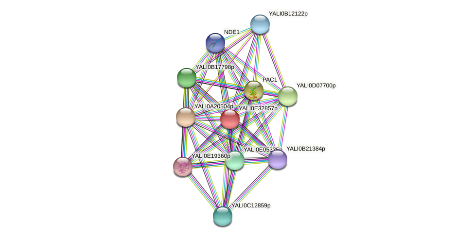 XP_504704.1 protein (Yarrowia lipolytica) - STRING interaction network