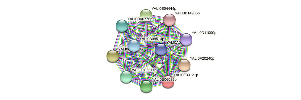 XP_504714.1 protein (Yarrowia lipolytica) - STRING interaction network