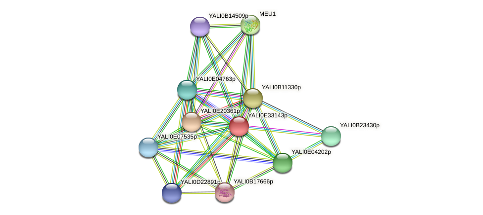 XP_504715.1 protein (Yarrowia lipolytica) - STRING interaction network