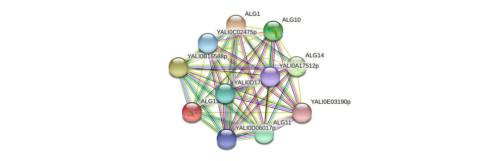 ALG13 protein (Yarrowia lipolytica) - STRING interaction network