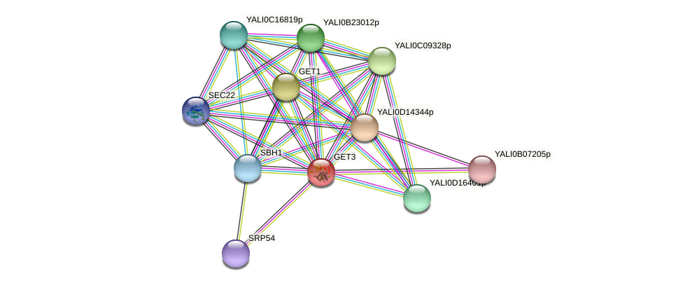 GET3 protein (Yarrowia lipolytica) - STRING interaction network