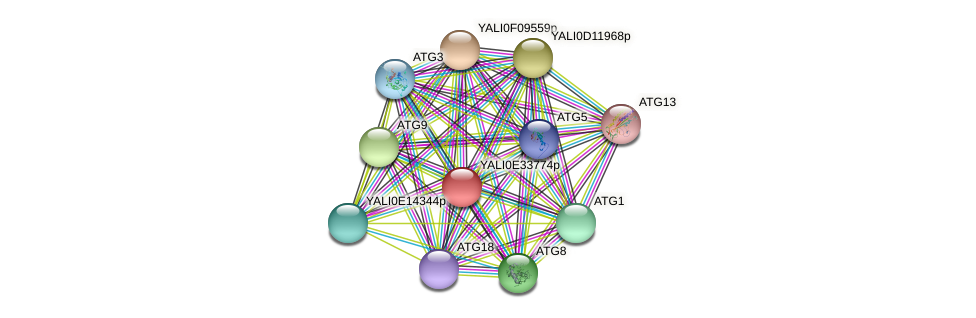 XP_504745.1 protein (Yarrowia lipolytica) - STRING interaction network