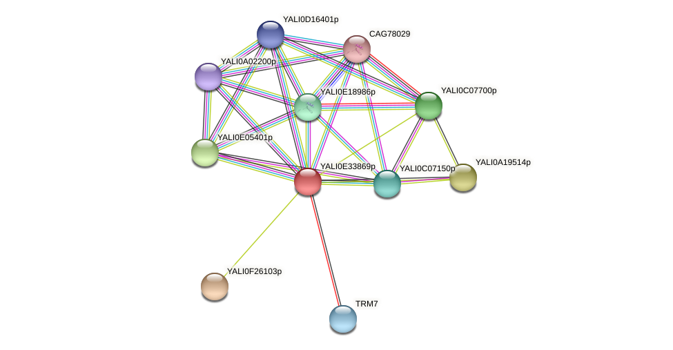XP_504749.1 protein (Yarrowia lipolytica) - STRING interaction network