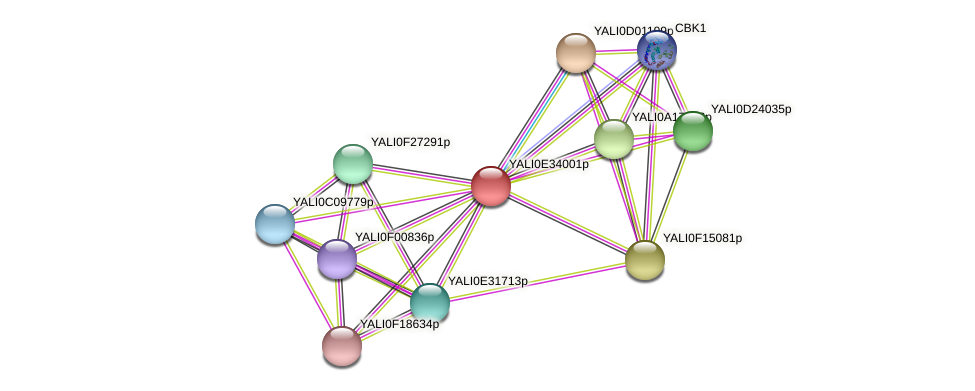 XP_504754.1 protein (Yarrowia lipolytica) - STRING interaction network