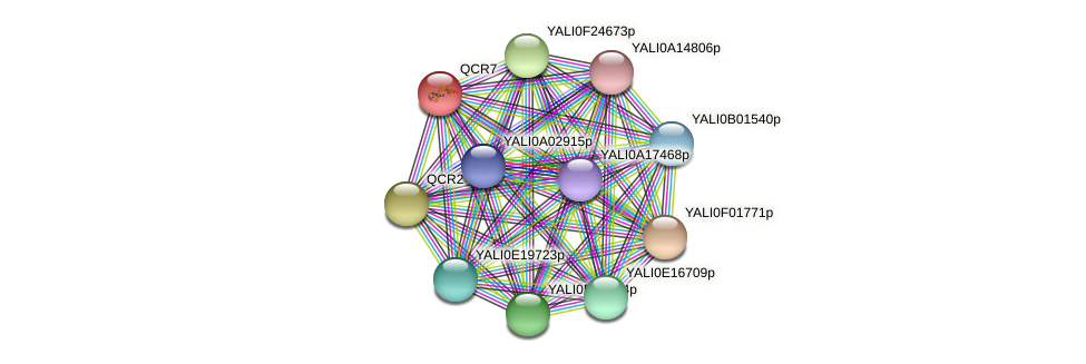 QCR7 protein (Yarrowia lipolytica) - STRING interaction network