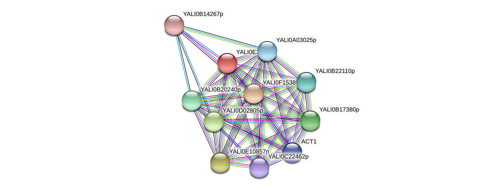 XP_504762.1 protein (Yarrowia lipolytica) - STRING interaction network