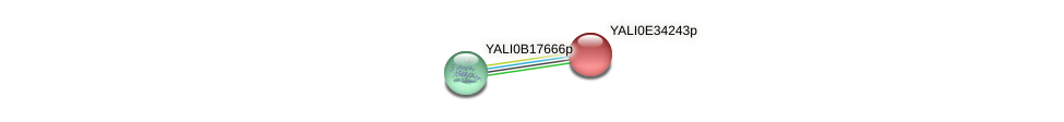 XP_504764.1 protein (Yarrowia lipolytica) - STRING interaction network