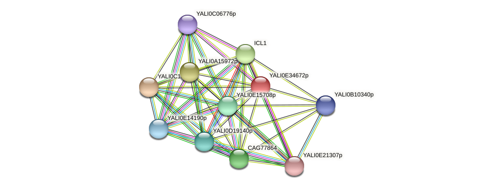 XP_504782.1 protein (Yarrowia lipolytica) - STRING interaction network