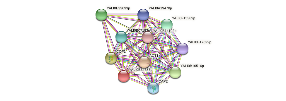 XP_504783.1 protein (Yarrowia lipolytica) - STRING interaction network