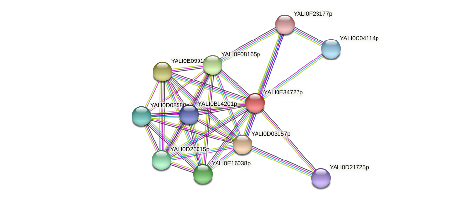 XP_504784.1 protein (Yarrowia lipolytica) - STRING interaction network