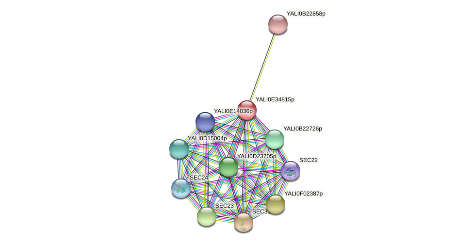XP_504788.1 protein (Yarrowia lipolytica) - STRING interaction network