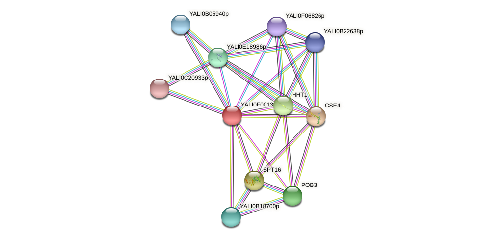 XP_504805.1 protein (Yarrowia lipolytica) - STRING interaction network
