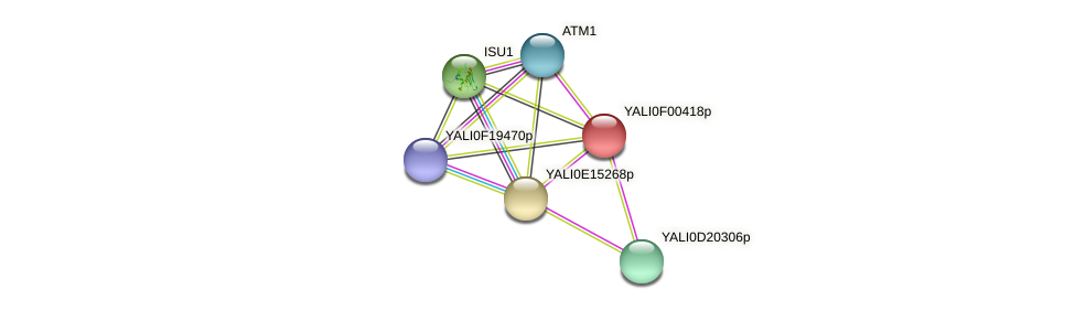 XP_504818.1 protein (Yarrowia lipolytica) - STRING interaction network