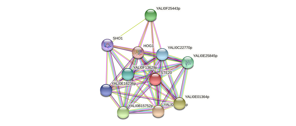 STE20 protein (Yarrowia lipolytica) - STRING interaction network