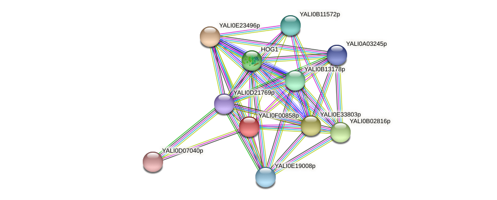 XP_504838.1 protein (Yarrowia lipolytica) - STRING interaction network