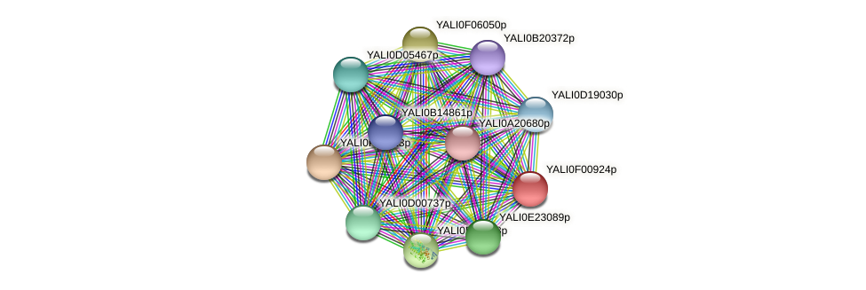 XP_504841.1 protein (Yarrowia lipolytica) - STRING interaction network