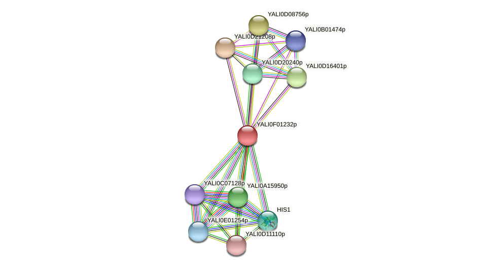 XP_504855.1 protein (Yarrowia lipolytica) - STRING interaction network