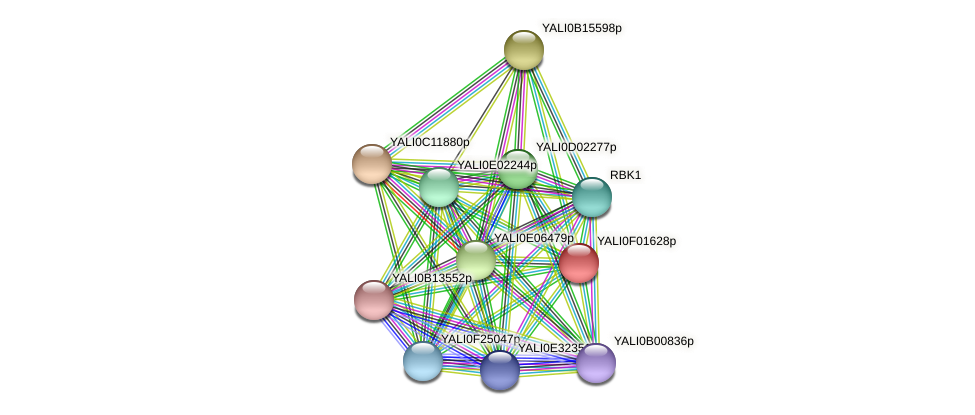 XP_504869.1 protein (Yarrowia lipolytica) - STRING interaction network