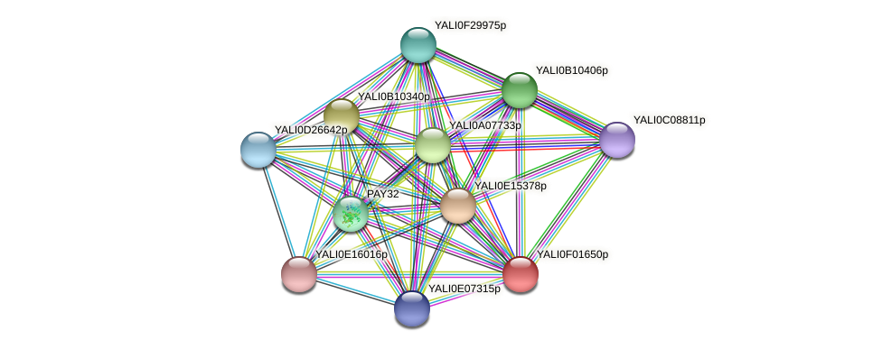 XP_504870.1 protein (Yarrowia lipolytica) - STRING interaction network