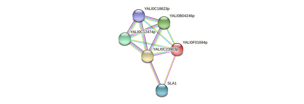 XP_504872.1 protein (Yarrowia lipolytica) - STRING interaction network