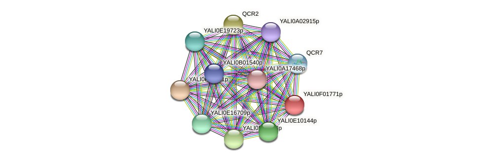 XP_504875.1 protein (Yarrowia lipolytica) - STRING interaction network
