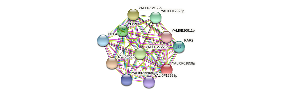 XP_504879.1 protein (Yarrowia lipolytica) - STRING interaction network