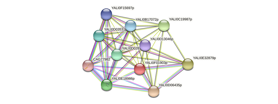 XP_504881.1 protein (Yarrowia lipolytica) - STRING interaction network