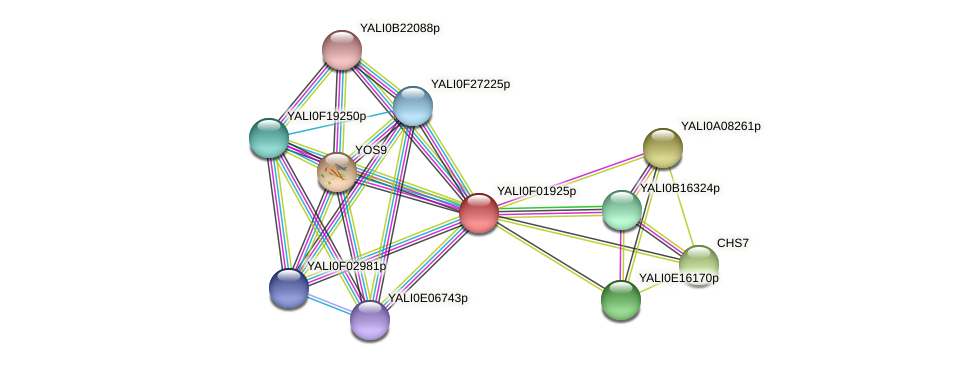 XP_504882.1 protein (Yarrowia lipolytica) - STRING interaction network